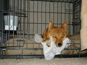 How to crate train a dog so he sleeps like this.