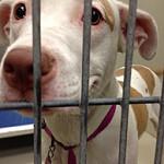 shelter dog photo