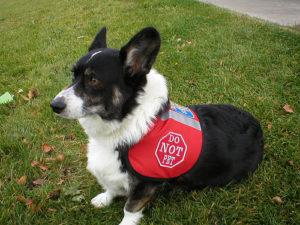 Can I train my own service dog