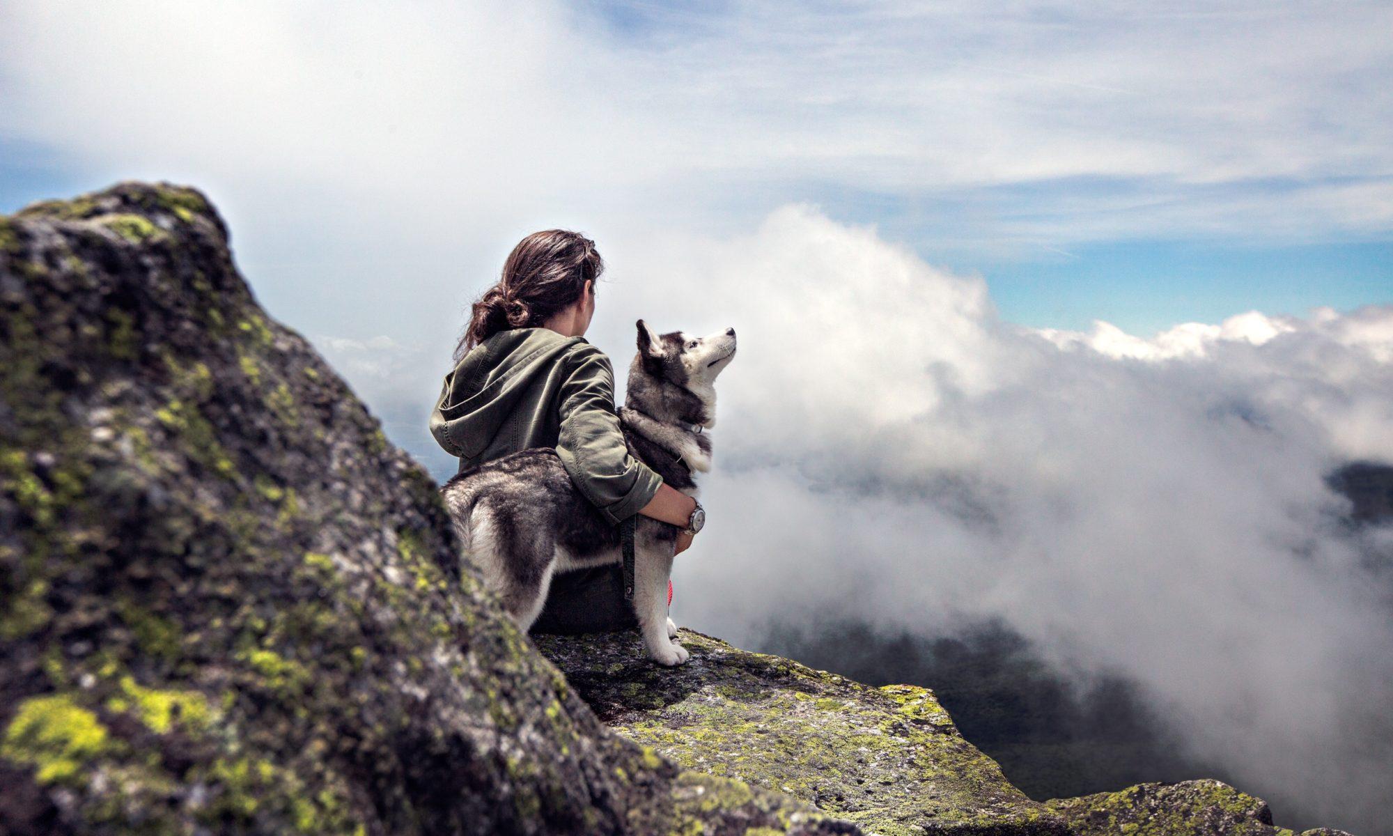 Anxiety Service Dog Tasks